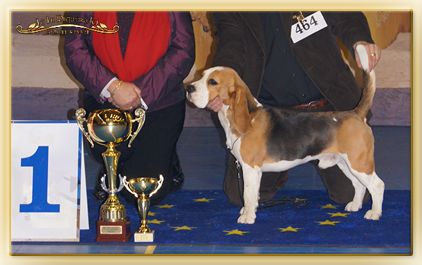 "Goofy ""Best in Show & Winner East Cup"""